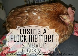 Losing A Flock Member Is Never Easy