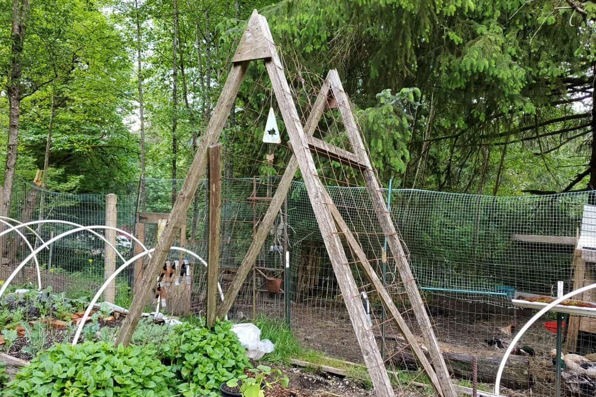 Build an A-Frame Trellis for the Garden