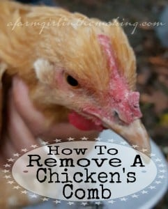 How To Remove A Chicken's Comb