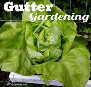 Gutter Gardening – A Great Container Garden