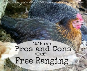 Pros And Cons Of Free Range Poultry
