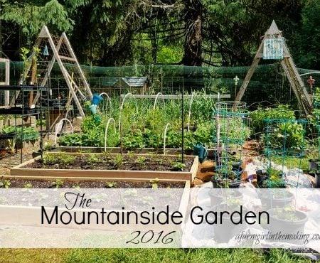 mountainside garden