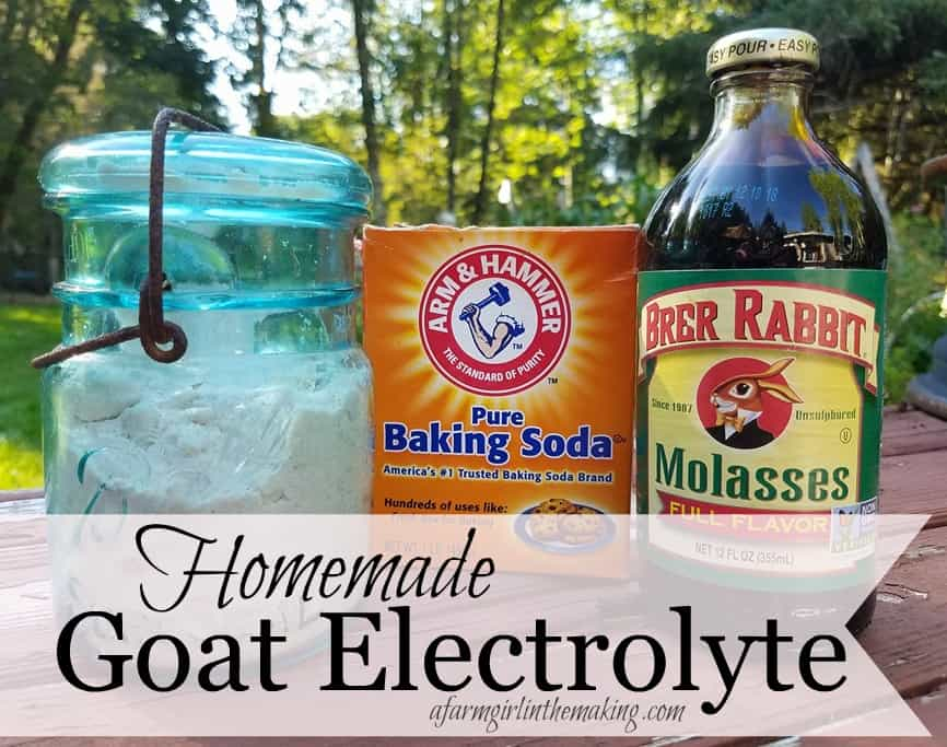 Homemade Goat Electrolyte