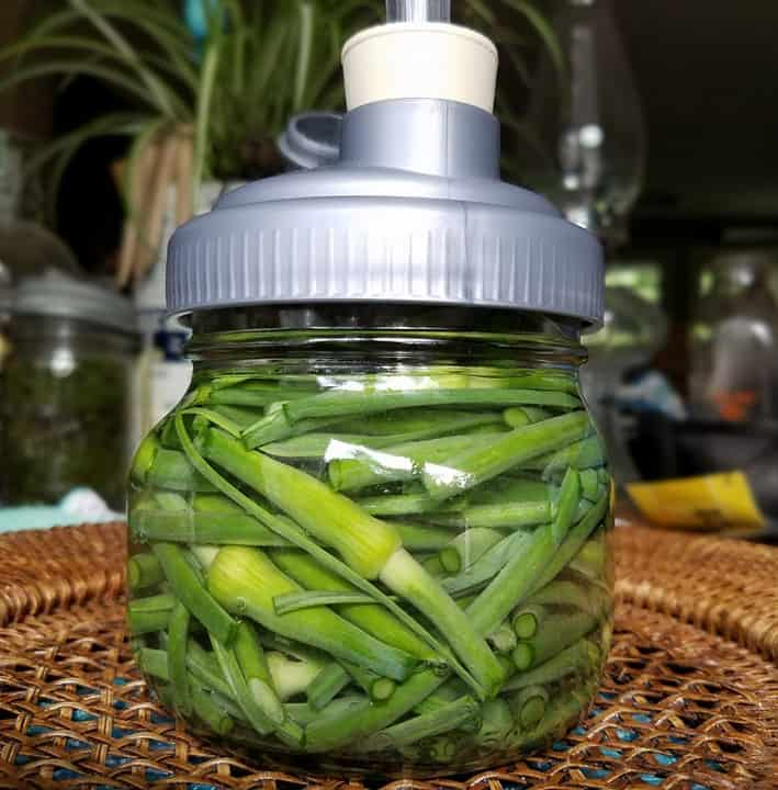 fermenting garlic scapes