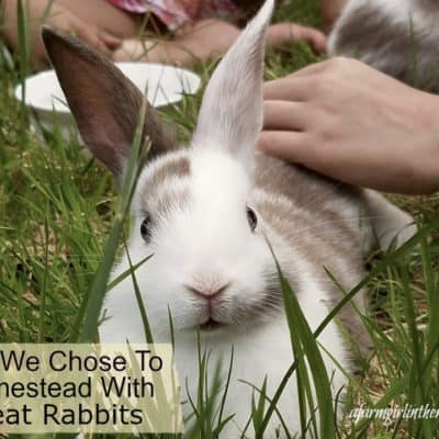 Why We Chose To Homestead With Meat Rabbits