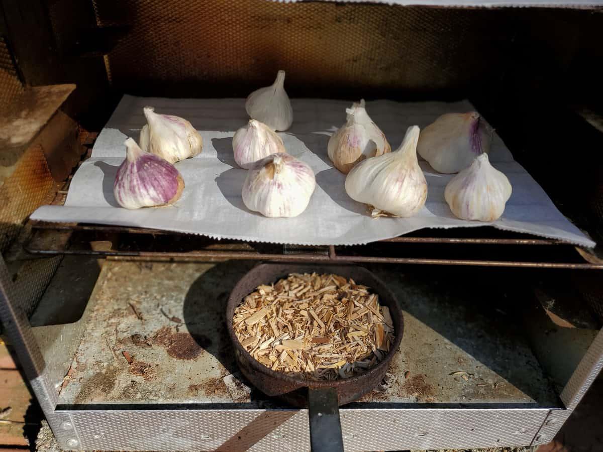smoking garlic