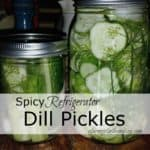 spicy refrigerated dill pickles