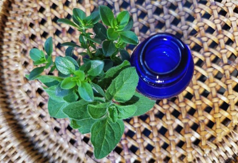 homesteading with herbs and essential oils