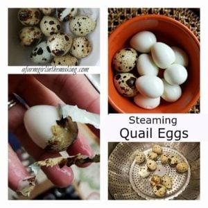 How To Steam Quail Eggs