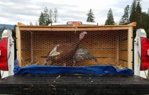 be thankful for a homesteading community