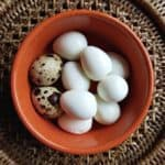 how to steam quail eggs