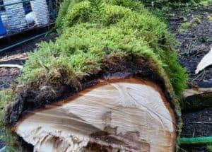 firewood kindling