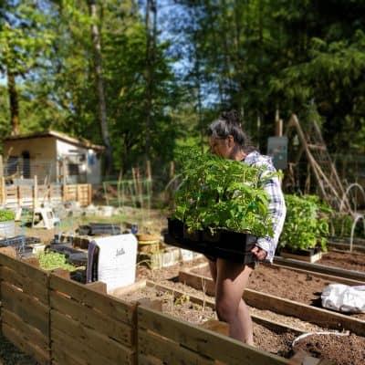Building Unique Raised Garden Beds