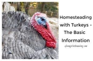 Raising Turkeys on the homestead