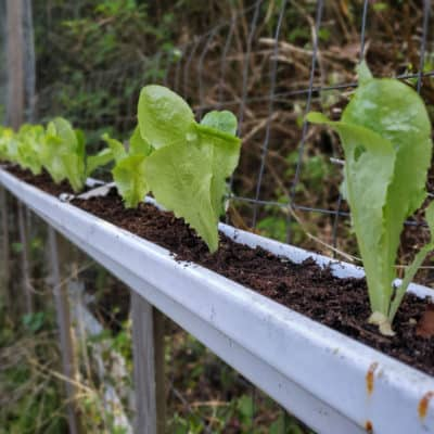Gutter Gardening | A Unique Container Garden