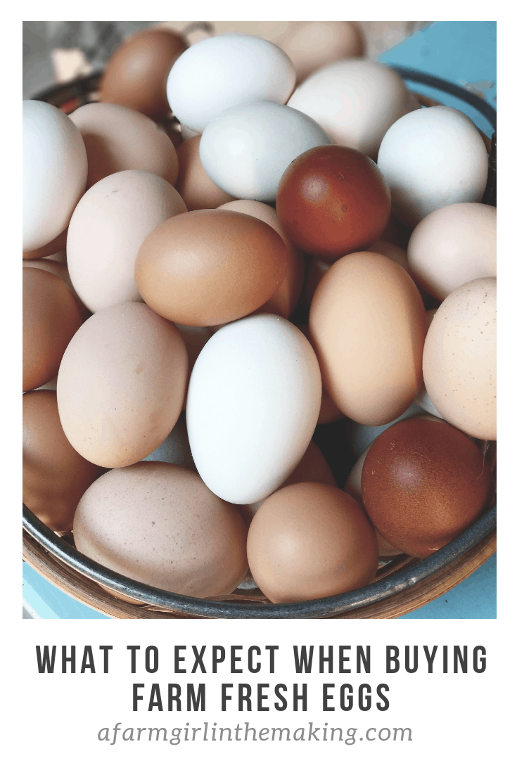 What to expect when buying farm fresh eggs