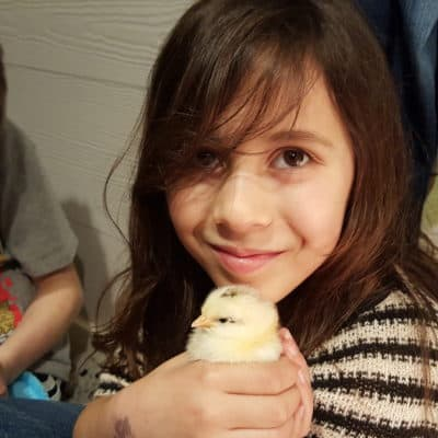 Selecting the Best Chicken Breeds for Children