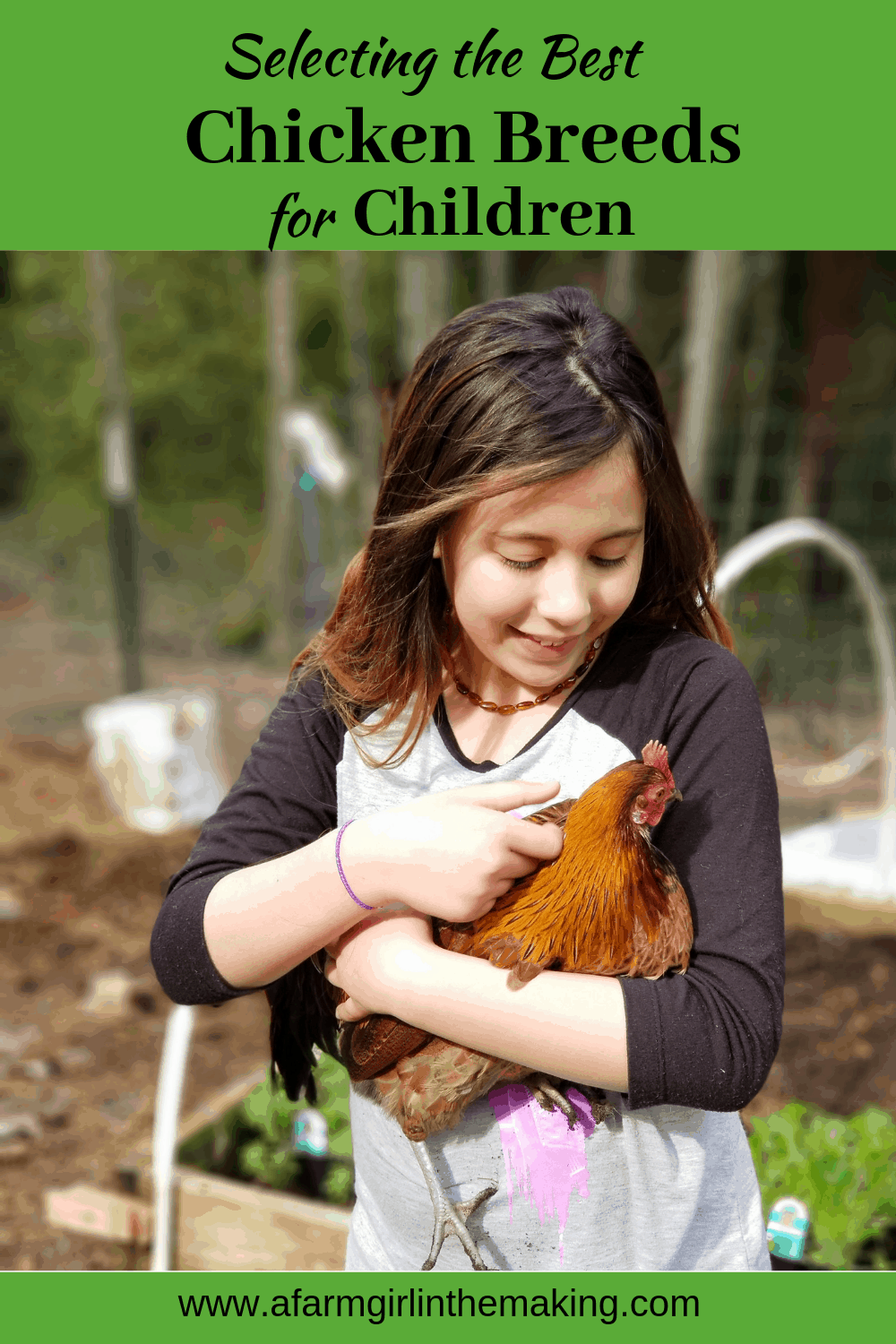 selecting the best chicken breeds
