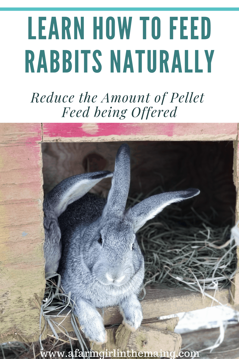 feeding rabbits naturally | reduce pellet feed