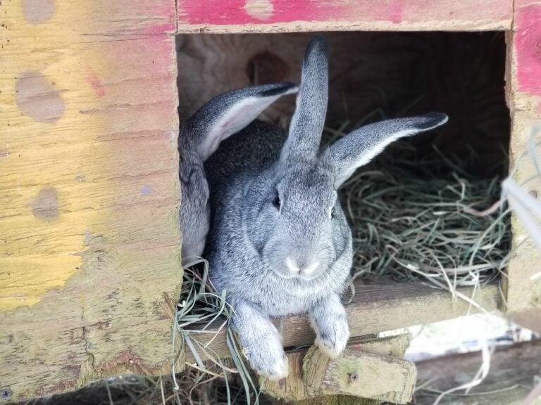feeding rabbits naturally | reduce pellet feed