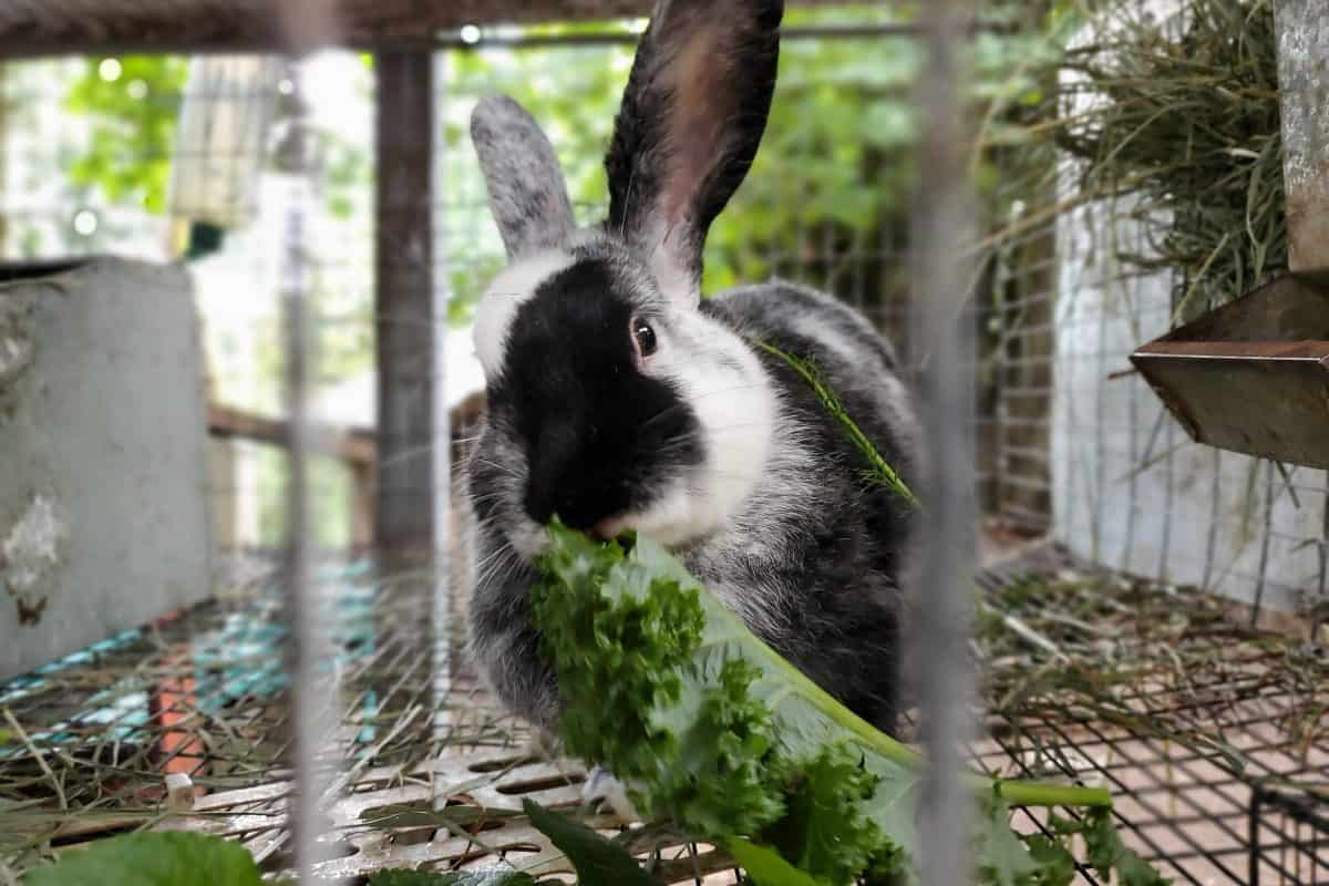 Housing Meat Rabbits | Rabbit Housing Options