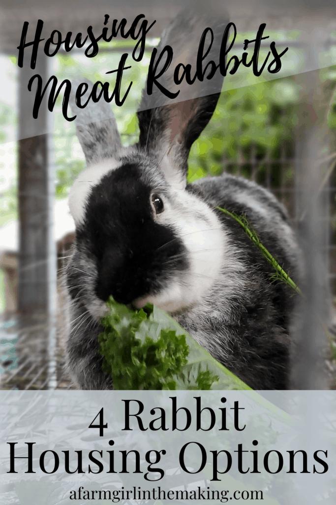 housing meat rabbits