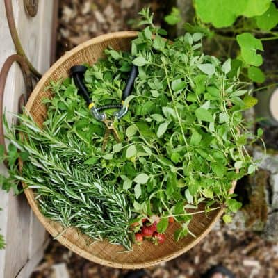 How to Dry Fresh Herbs from the Garden with These 5 Method