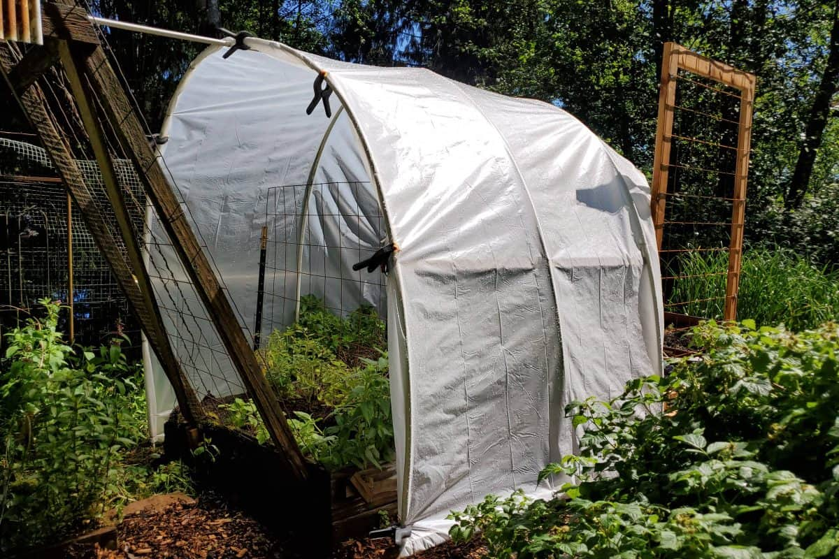 DIY Polytunnel for under Forty Dollars