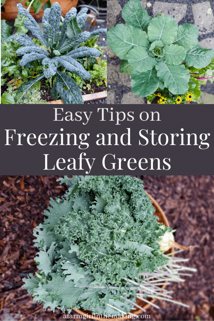 steps for freezing swiss chard and other greens