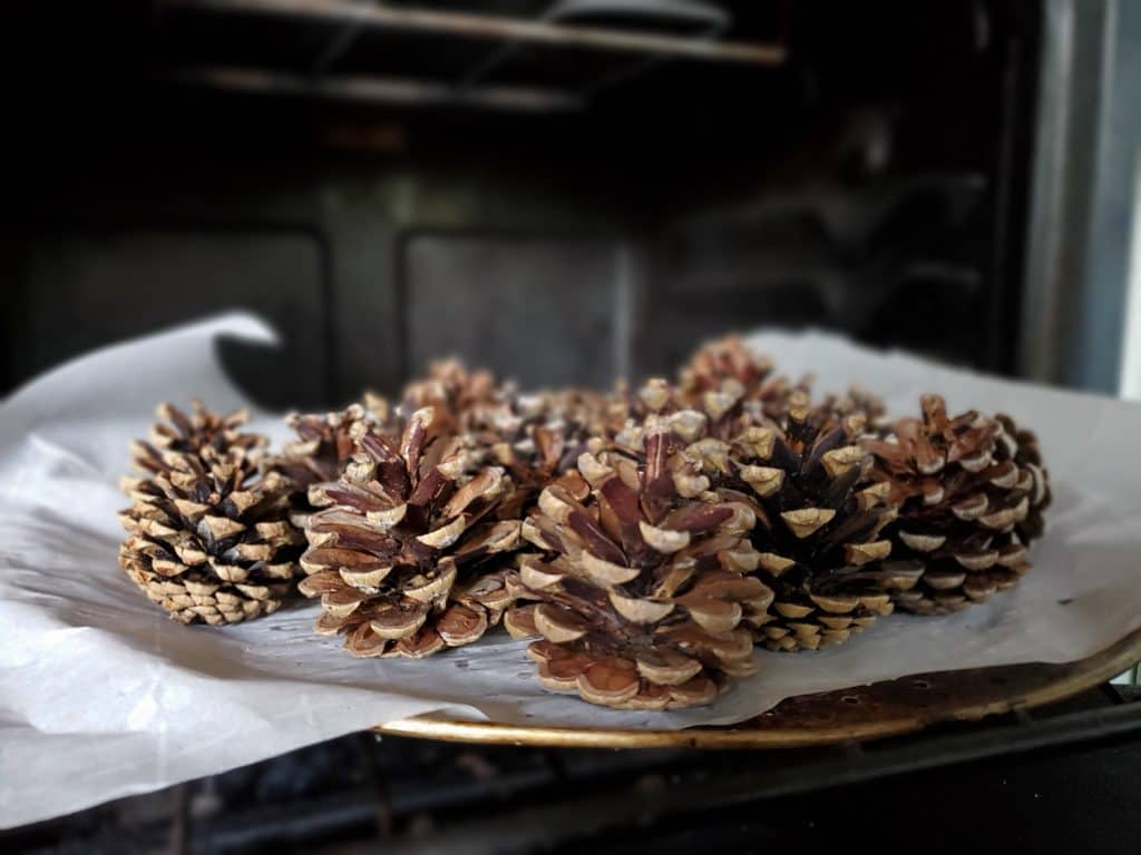 properly dry pinecones to make scented pine cones