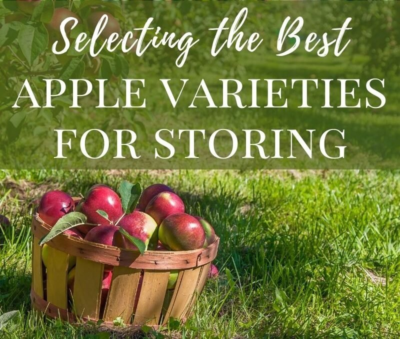 Pin image for the best keeping apple varieties.