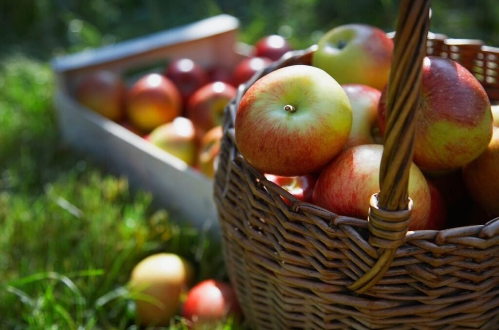 Learn which apples store best for long-term storage.