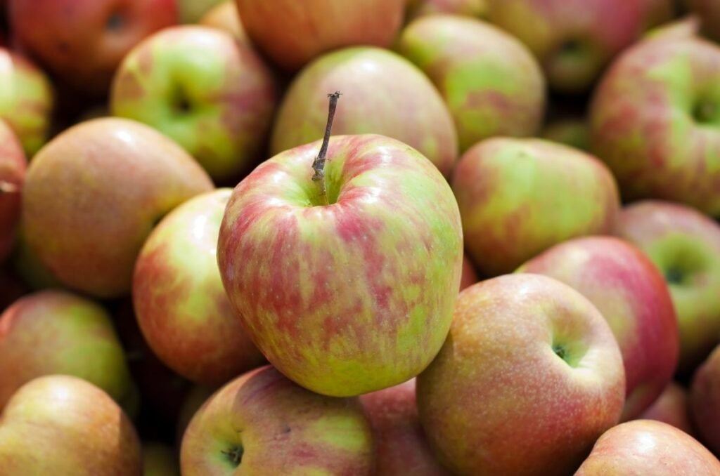 When storing apples for winter, look at the Honey Crisp variety..